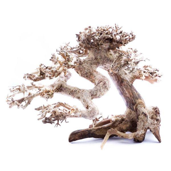 SuperFish Holz Bonsai Treibholz (Größe S)